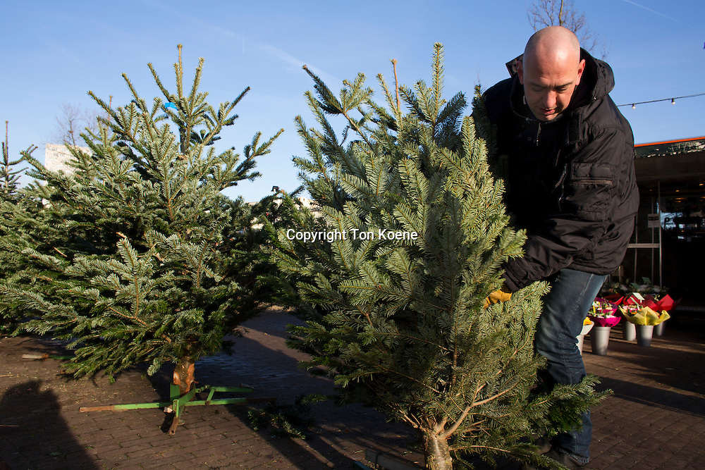 Christmas tree sales in Holland