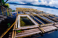 Indonesia, Sulawesi, Tondano. Lake Tondano is a large lake along the side of an ancient volcanic caldera. The shallow lake is a popular resort area. A small boat with a fisherman. Fish farming is common here.