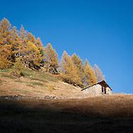 I colori dell'autunno a Chiesa Valmalenco. Autumn colours in Chiesa Valmalenco (SO) Località Chiareggio,Alpe dell'oro.