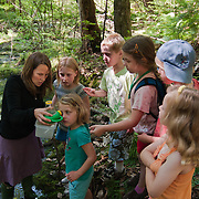 A group of 6,7, and 8 year olds study mosquito larvae in a swamp on Three Mile Island.