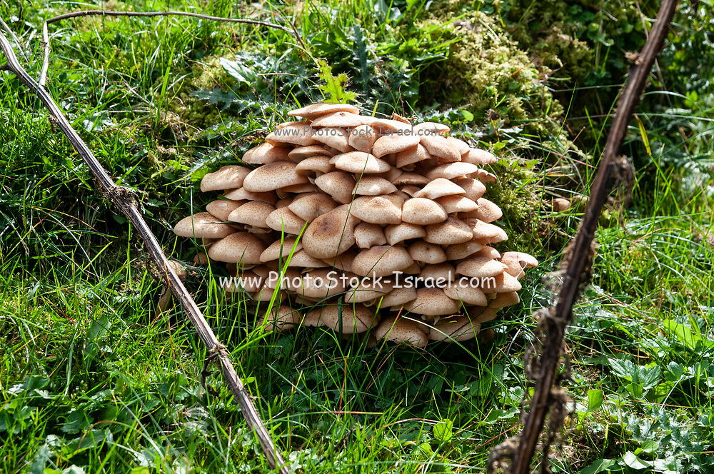 Cluster of mushrooms on the forest floor, Photographed in Stubai Valley, Tyrol, Austria