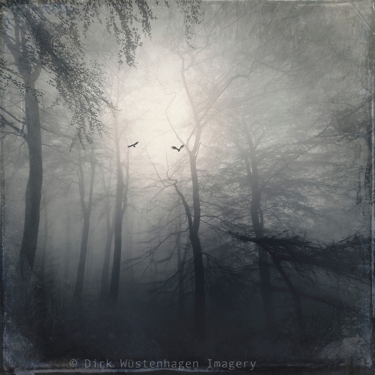 Silhouettes of trees and birds on a misty spring morning - photograph edited with texture overlays