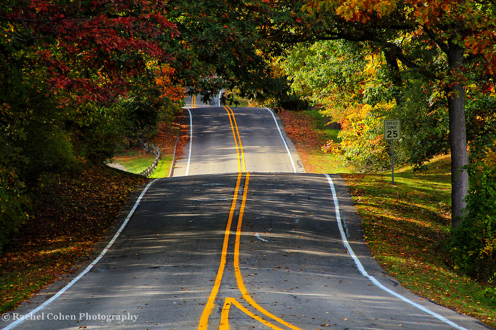 """""""Two Roads Converge""""<br /> <br /> If you love roads and autumn then you'll love this beautiful fall image. Two roads converge into one. Deep yellow stripes bring out the definition of the bumps and curves in the road itself, while lovely autumn colors line the sides!<br /> <br /> Autumn Landscapes of Michigan by Rachel Cohen"""