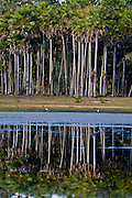Aquidauana_MS, Brasil...Lago na Fazenda com a mata ciliar na fazenda Rio Negro no Pantanal...The lake with riparian in the Rio Negro farm in Pantanal...Foto: JOAO MARCOS ROSA / NITRO