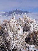 Hoarfrost and rime covering sagebrush, Pahsimeroi Valley with the Lemhi Range beyond, Idaho.