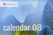 PRODUCT: Calendar (Corporate)<br /> TITLE: <br /> CLIENT: Canada Drugs