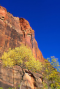 Red sandstone cliffs and fall color at the Temple of Sinawava in Zion Canyon, Zion National Park, Utah