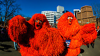 The Mile High Monster (a SUPER FAN), Denver Broncos Super Bowl 50 victory parade in Downtown Denver, Colorado USA