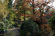 Autumn leaves, colours and an ornamental bridge in the gardens at Winterbourne Botanic Garden, the botanical garden of the University of Birmingham, located in Edgbaston, Birmingham, United Kingdom. Set in 7 acres, it is notable as a rare surviving example of an early 20th century high status suburban 'villa' garden, inspired by the Arts and Crafts movement of the Edwardian period. Both Winterbourne Botanic Garden and Winterbourne House are owned by the University of Birmingham and are open to the public as a heritage attraction.