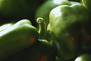 Close up selective focus photograph of Green Bell peppers