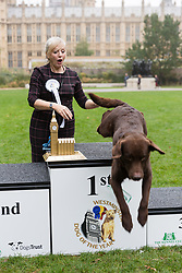 © Licensed to London News Pictures. 26/10/2017. LONDON, UK.  First prize winner, TRACEY BRABIN MP and her dog, Rocky, who leaps from the table at the Westminster Dog of the Year Competition held in Victoria Tower Gardens. The Westminster Dog of the Year Competition is organised jointly by the Kennel Club and the Dogs Trust..  Photo credit: Vickie Flores/LNP