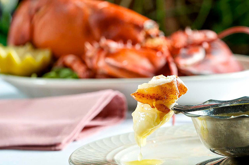 Lobster claw with melted butter