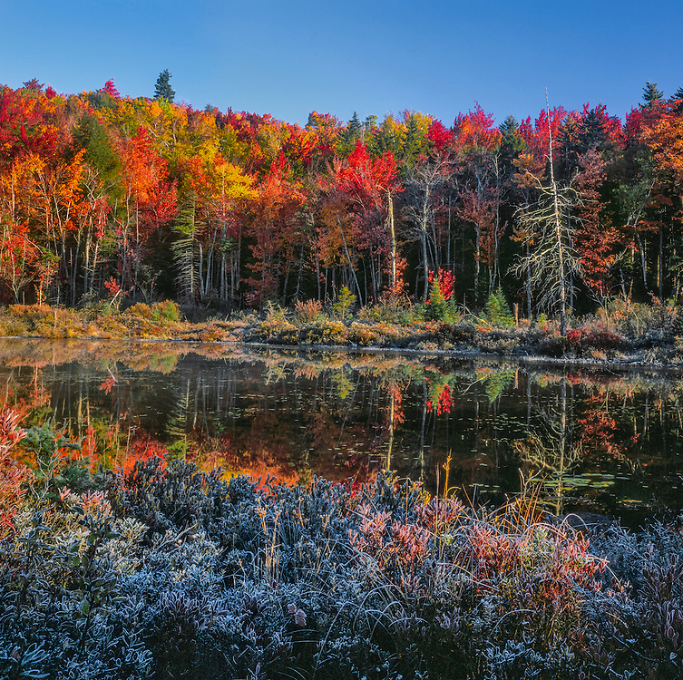 Red maples at edge of pond on a frosty fall morning,  John Giles State Forest, Springfield, NH