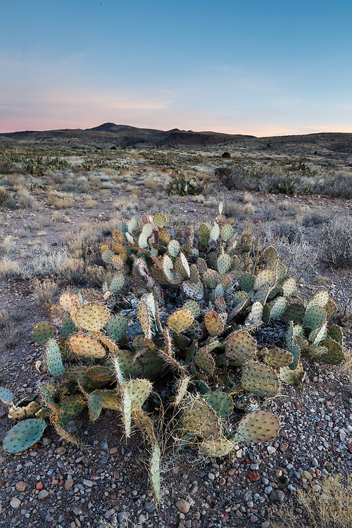 Cactus and landscape, Ladder Ranch, west of Truth or Consequences, New Mexico, USA.