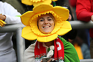 a Wales fan  looks on before k/o. Rugby World Cup 2015 quarter final match, South Africa v Wales at Twickenham Stadium in London, England  on Saturday 17th October 2015.<br /> pic by  John Patrick Fletcher, Andrew Orchard sports photography.
