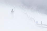 Skier makes her way down the Turoa ski field in gale force winds and whiteout conditions. Turoa is located on active volcano Mount Ruapehu, New Zealand.