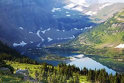 Mountain Goat, Hidden Lake, Glacier National Park