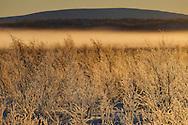 Mid winter landscapes at Järämä, Övre Soppero, Lapland, Laponia, Norrbotten county, Sweden