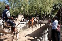 GAUCHOS AREEANDO CABALLOS EN LA FERIA ESPECIAL EN CARMEN DE ARECO, PROVINCIA DE BUENOS AIRES, ARGENTINA
