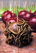 A mealworm covered caramel apple is one of the many insect-based novelty sweets made by the Hotlix Candy Company, Pismo Beach, California. (Man Eating Bugs page 192).