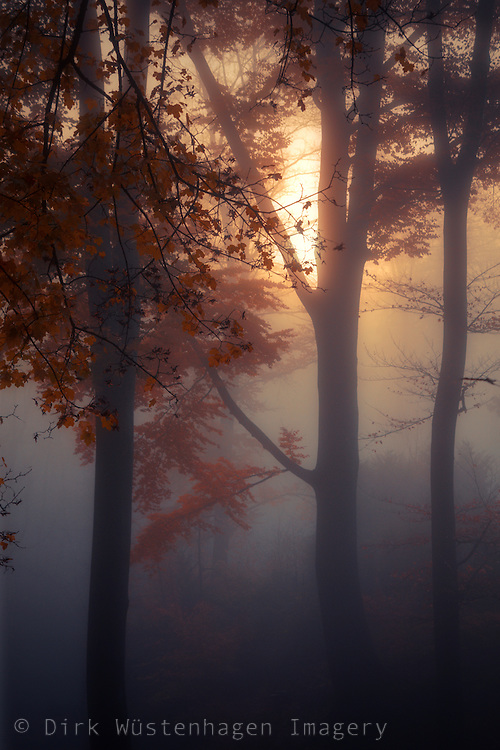 Fog in a forest a sunrise