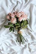 Pink Roses Silk flower on white background