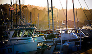 Golden sunset light filters through the mist and trees of Monterey, illuminating the masts and wheelhouses of boats anchored in the harbor.