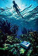 A snorkeler semi-silhouetted against the surface of the water at Buck Island Reef National Monument near Saint Croix in the U.S. Virgin Islands. An underwater plaque informs snorkelers that the delicate Elkhorn coral cannot support the weight of a tourist.  © Steve Raymer / National Geographic Creative