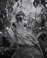 William Rickets Sanctuary - Black and white photo art print of Sculpture of an Aboriginal boy in the deep woodland of the Dandenon Mountain near Melbourne Australia. Taken 1993 by Paul Williams,