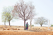 """21 April 2016 - Gategaon, Latur - INDIA.<br /> <br /> EXCLUSIVE FEATURE<br /> India drought drives farmers to suicide<br /> <br />  Mahakant Mali hanged himself from a mango tree a short distance from his farm a few weeks ago, a victim of the severe drought affecting central India<br /> <br /> Mali's soya bean crop had withered away and he had racked up loans of 150,000 rupees as he bored wells to find water in Maharashtra state.<br /> <br /> On a Monday evening, the 55-year-old told his wife he was going to meet a friend and did not return. A child discovered his body the following morning.<br /> <br /> """"What can I do?"""" says his widow Kamalbai at their home in Gategaon, one of 943 villages in Maharashtra's Latur district.<br /> <br /> Latur is part of the state's predominantly agricultural Marathwada region, where 273 farmers committed suicide between January and March this year.<br /> <br /> The area is among the worst affected by the drought and some families in Latur have left for cities such as the state capital Mumbai, nearly 500 kilometres away. In Latur town, there are huge queues at water storage tanks that are fed from dams. People wait in the searing heat for hours, sometimes the entire day, to fill up their containers. Police guard some of the tanks to prevent fights.<br /> <br /> Water is also being supplied to Latur by rail, with two 50-wagon trains arriving last week. The water is first taken to a filtration plant before being distributed across the town by lorry.<br /> <br /> The Indian government says about 330 million people in 10 states are affected by the drought, which has been blamed on two consecutive years of poor monsoon rainfall. Adding to their misery, temperatures are above 40°C – unusually high for the time of year.<br /> <br /> Widespread production of sugar cane, a water intensive crop, in Maharashtra's Marathwada region, which includes the districts of Latur, Beed and Osmanabad, is also widely blamed for draining water resources.<br /"""