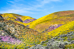 The Temblor Hills in Spring, an amazing place in the spring after the rains.