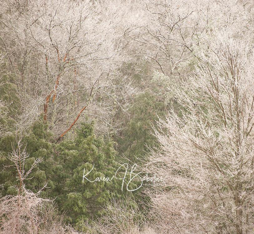 Winter Tapestry.  ©Karen Bobotas Photographer