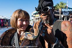 Kiera checks out a snake on Main Street during Biketoberfest, Daytona Beach, FL, October 18, 2014, photographed by Michael Lichter. ©2014 Michael Lichter
