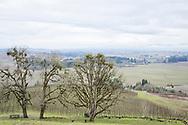 Vingården Antica Terra, Dundee i Oregon, USA