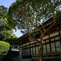 Take-dera;<br />Hokoku-Ji;<br />Kamakura, Japan 2019<br /><br />© Pete Jones<br />pete@pjproductions.co.uk