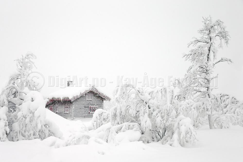 Winterlandscape at Høgåsen, Dagali/Skurdalen, Norway   Vinterlandskap på Høgåsen, Dagali/Skurdalen, Norge