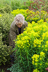 Carol supporting Euphorbia palustris with pea sticks