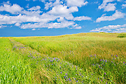 Clouds and vegatation on dunes<br />New London<br />Prince Edward Island<br />Canada