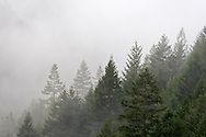 A heavy rainstorm clears from Silverdaisy Mountain in Manning Provincial Park near Hope, British Columbia, Canada