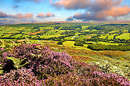 View of Danby Dale and Botton Village with heather flowering.  North Yorks National Park, North Yorkshire, England .<br /> <br /> Visit our MEDIEVAL PHOTO COLLECTIONS for more   photos  to download or buy as prints https://funkystock.photoshelter.com/gallery-collection/Medieval-Middle-Ages-Historic-Places-Arcaeological-Sites-Pictures-Images-of/C0000B5ZA54_WD0s