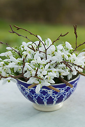 Snowdrops in Moroccan bowl arranged using noughts and crosses grid. Galanthus nivalis