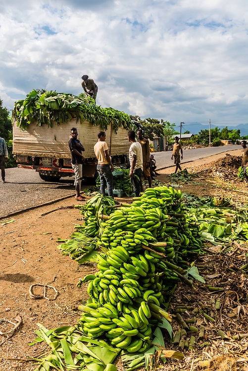 Bananas being loaded onto a truck, Gamo Gofa, Southern Nations Nationalities and People's Region, Ethiopia.