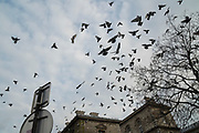 """March, 19th, 2020 - Paris, Ile-de-France, France: Pigeons taking over the lifeless empty streets of Paris, on the third day of a near total lockdown imposed in France. All journeys outside the home unless justified for essential professional or health reasons are outlawed. Anyone flouting the new regulations is punished with monetary fines. French police control of citizens and inspection of valid papers allowing citizens to travel. The most extreme measures so far in France to control the spread of the Coronavirus. Earlier in the week, President of France, Emmanuel Macron, said that citizens must stay at home from midday on Tuesday for at least 15 days. He said """"We are at war, a public health war, certainly but we are at war, against an invisible and elusive enemy"""". Nigel Dickinson"""