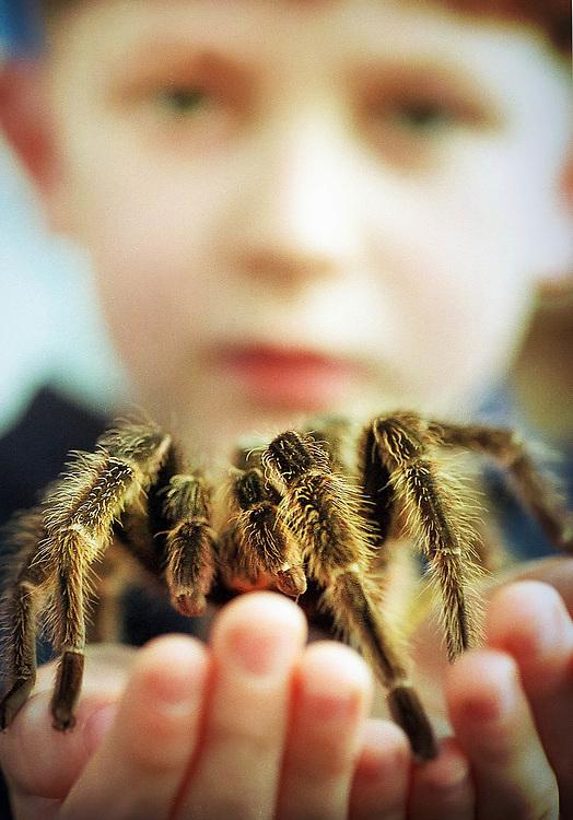 Pupil holding  a tarantula at a school in London