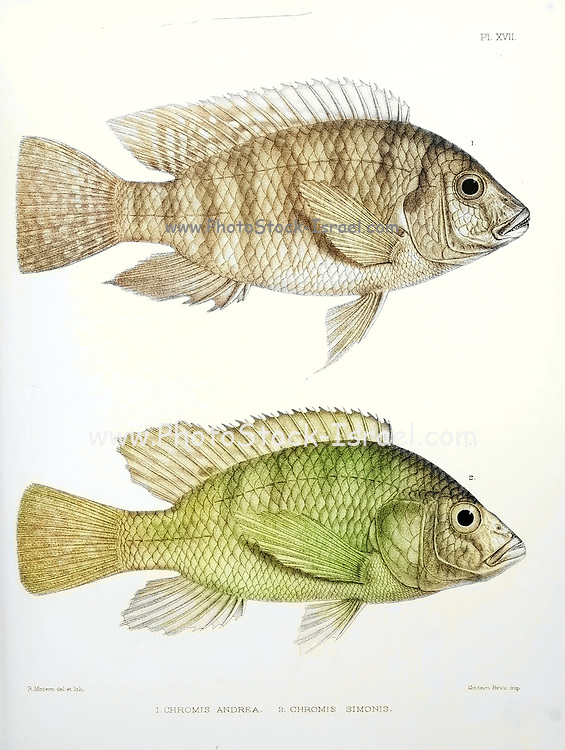Machine colourized Chromis fish [Here as Chromis andrew and Chromis simonis] From the survey of western Palestine. The fauna and flora of Palestine by Tristram, H. B. (Henry Baker), 1822-1906 Published by The Committee of the Palestine Exploration Fund, London, 1884