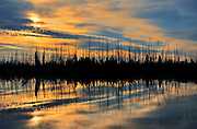 Old burn reflected in wetland at sunrise <br />