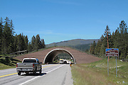 Wildlife bridge over Highway 93 on the Flathead Indian Reservation in Montana allows safe passage  over the roadway for a variety of game and non-game animals.