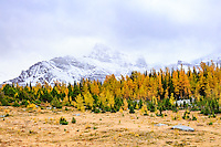 Image from a hike from Moraine Lake to Larch Valley in Banff National Park to see the Larch trees turn yellow before their needles fall off. Although a conifer, the larch is a deciduous tree and loses its needles in the fall and larch valley is an amazing place to see a valley full of the trees all changing color at the same time.<br /> <br /> ©2015, Sean Phillips<br /> http://www.RiverwoodPhotography.com