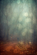 man on bicycle with a dog on a leash in a misty forest - texturized photograph