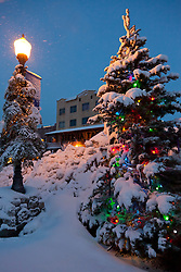 """""""Snowy Christmas Tree in Truckee"""" - This snow covered Christmas tree was photographed in Historic Downtown Truckee, CA."""